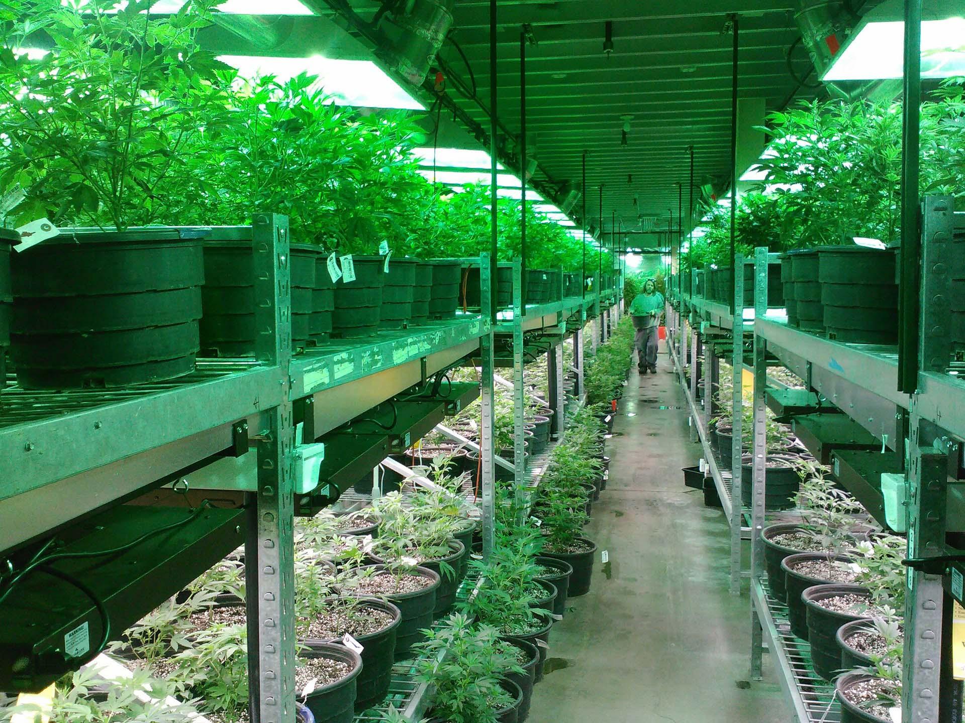 marijuana cultivation facility