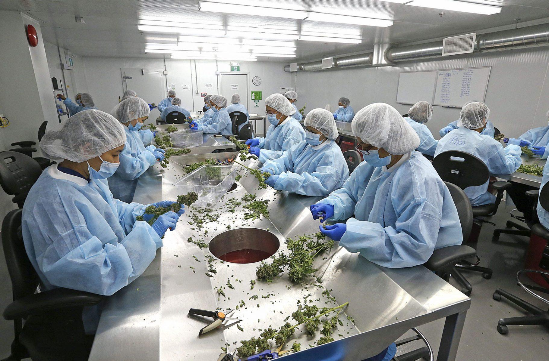 cannabis processing facility